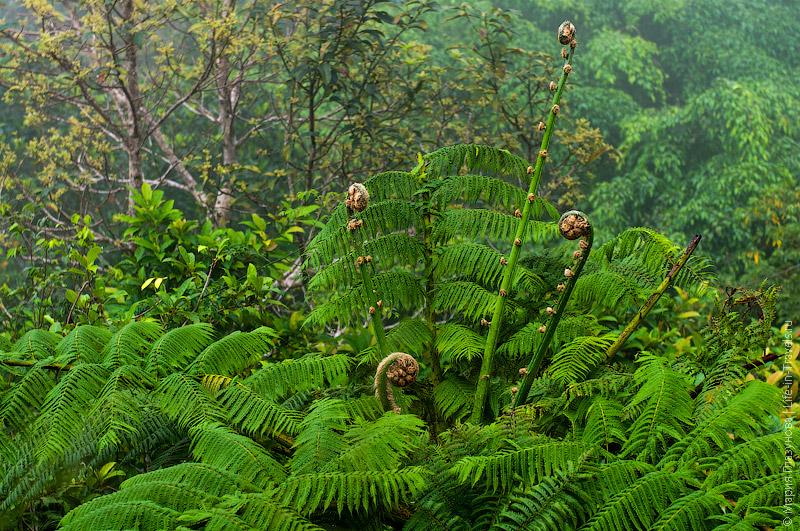 Лесная флора на Филиппинах