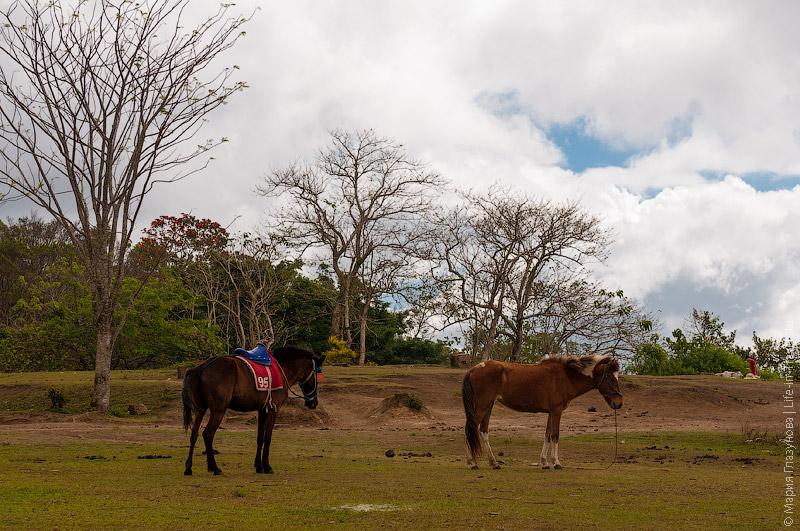 Соседний парк с лошадьми