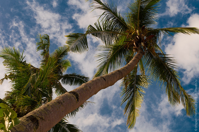 В гамаке под пальмами