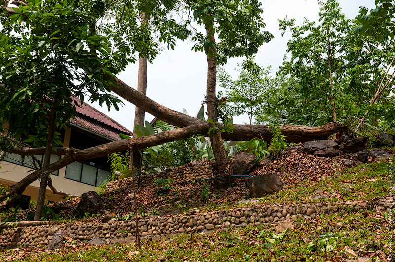 Деревья, поваленные во время бури