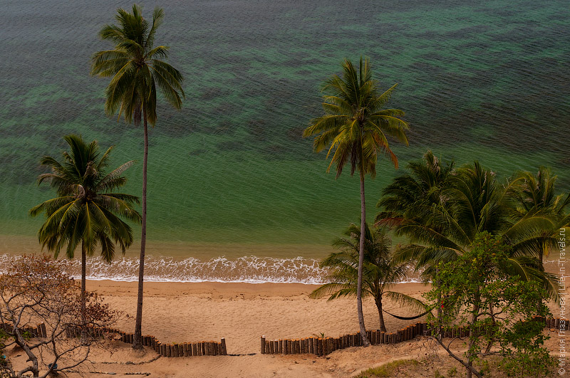 Пальмы, вид сверху