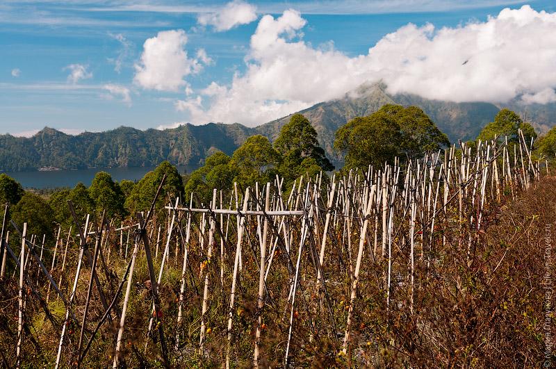 Огороды на вулкане