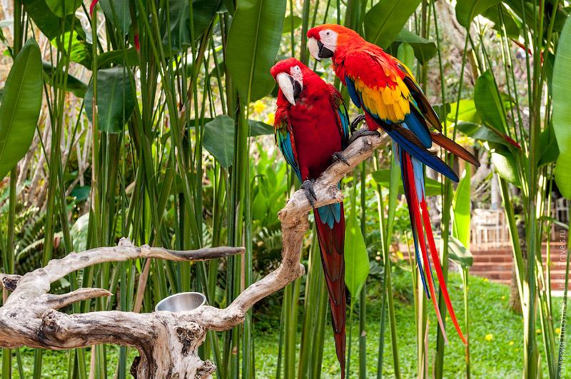 Тропические птицы на Бали
