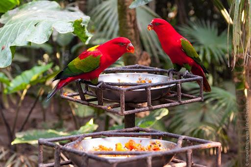 Парк птиц на Бали Индонезия