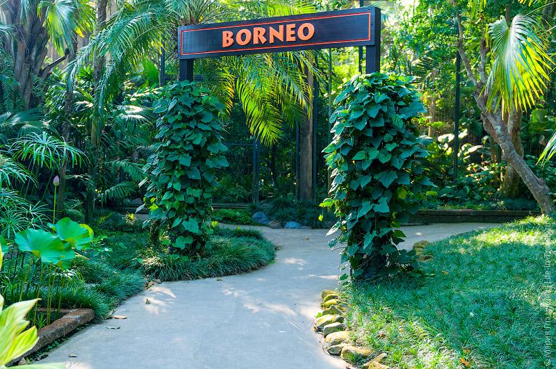 Вольер с птицами острова Борнео