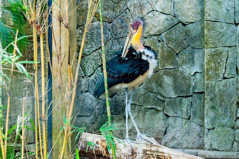 Искусственный вольер для птиц