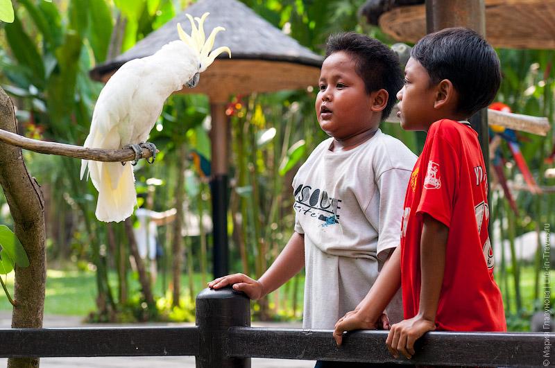 Говорящая птица
