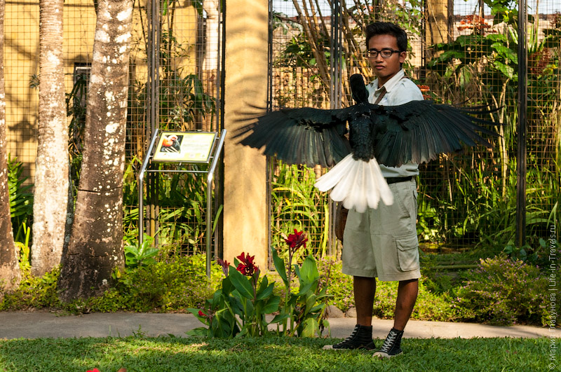 Шоу птиц на Бали