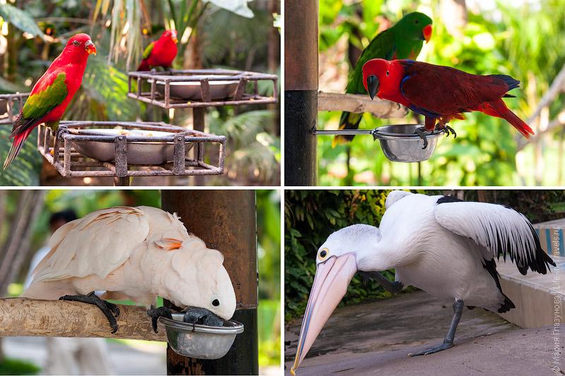 Кормёжка птиц