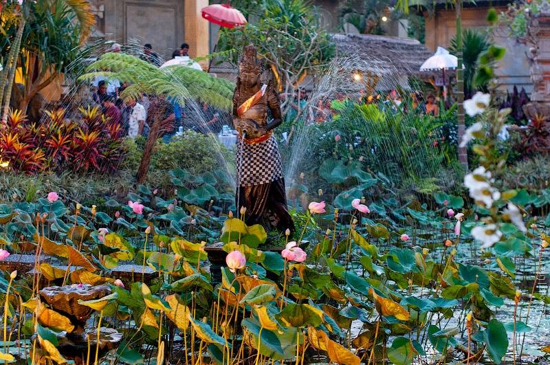 Лотосы на Бали