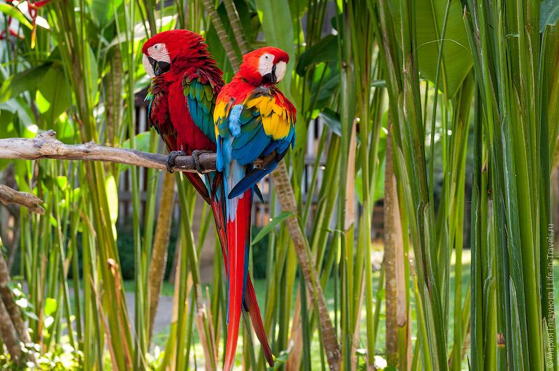Тропические птицы на острове Бали
