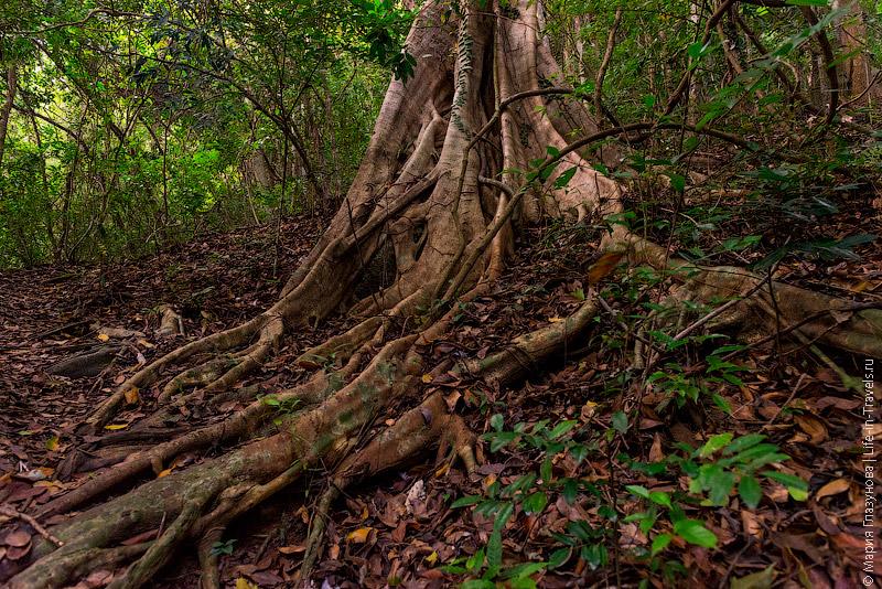 Джунгли на Ко Пангане