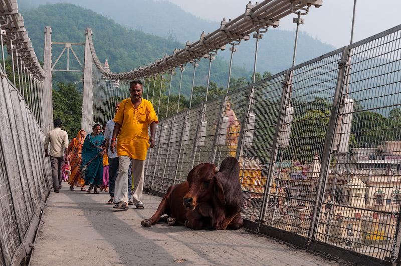 Подвесной мост в Ришикеше