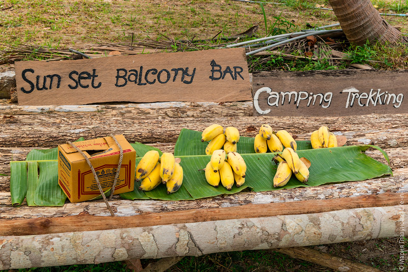 Бананы – лучший завтрак для туриста