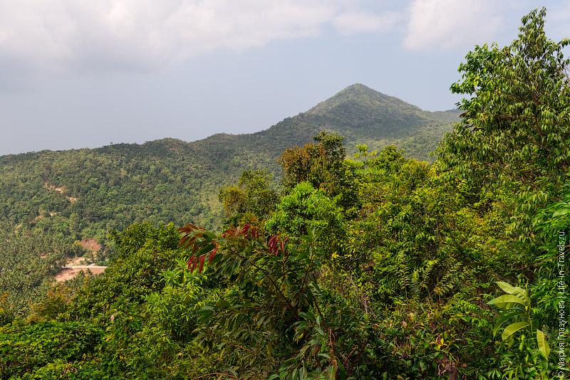 Джунгли Пангана