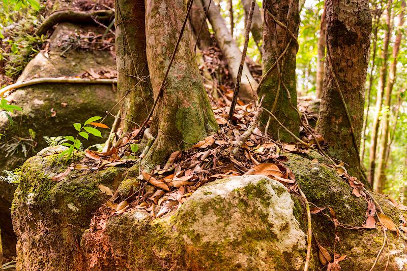 Дерево выросшее из камня