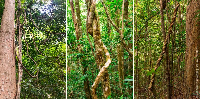 Деревья с лианами