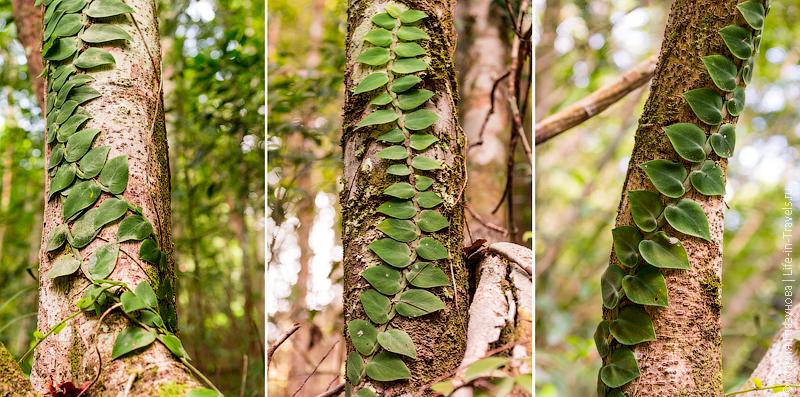 Деревья в джунглях