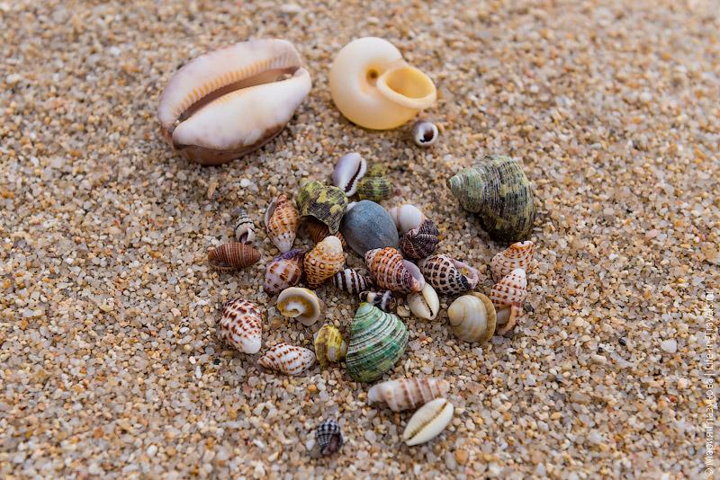 Ракушки на пляже