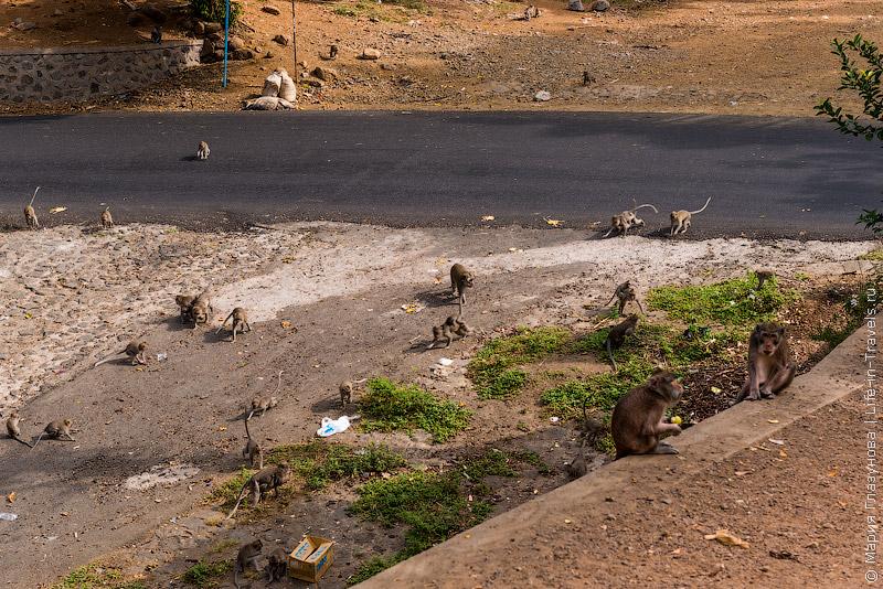 Бали, обезьяны