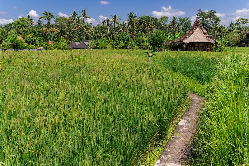 Бег по тропинкам на Бали