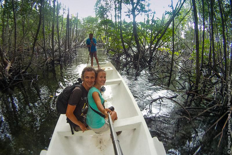 Среди мангровых лесов