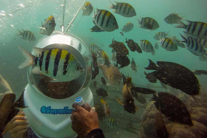 Seawalker на Бали