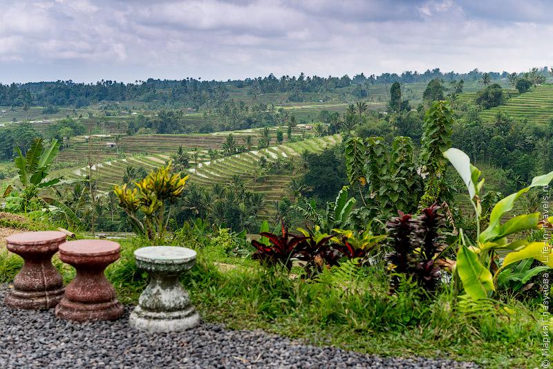 Рисовые террасы Jatiluwih на Бали.jpg