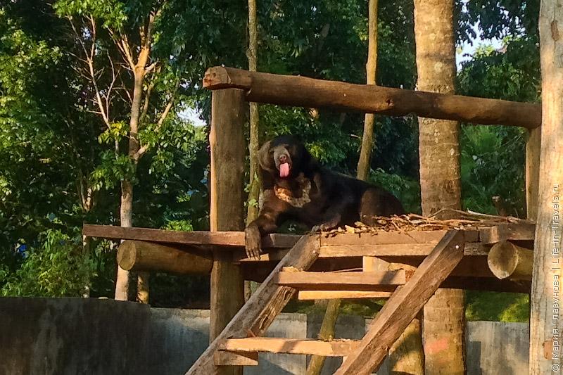 Медведь в тропиках