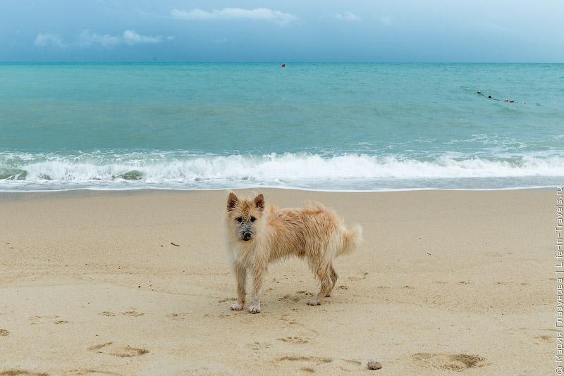 Пляж Ламаи Самуивап