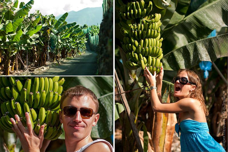 Банановые плантации