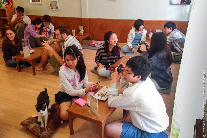 Кошачье кафе в Чиангмае