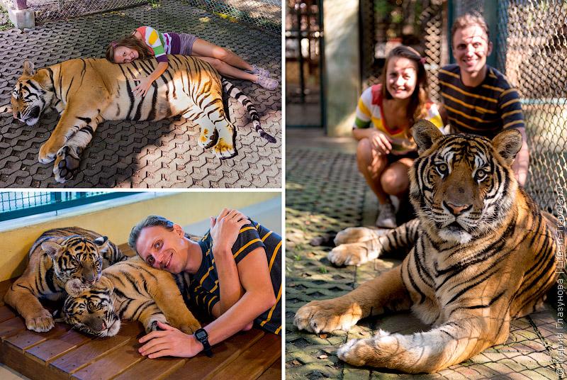 Тигровое Королевство в Чиангмае