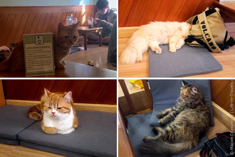 Кафе с кошками в Чиангмае