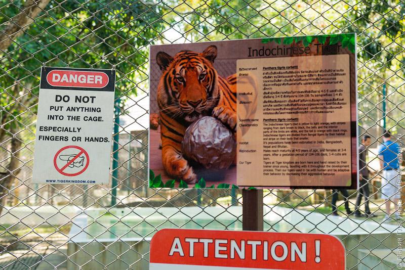 Tiger Kingdom в Таиланде