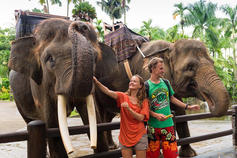 Парк слонов на Бали
