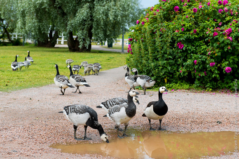 Парки в Хельсинки