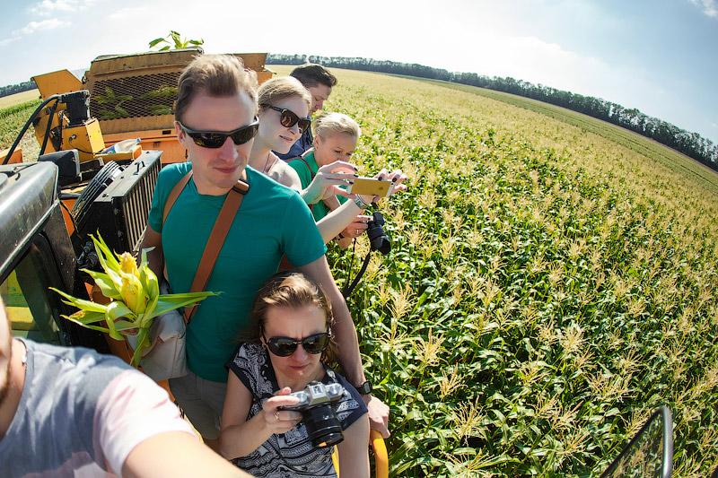 Кукурузные поля на Кубани