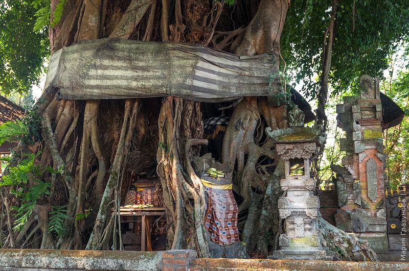 Деревья на Бали