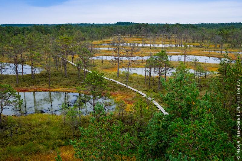 Болото Виру, Лахемаа, Эстония