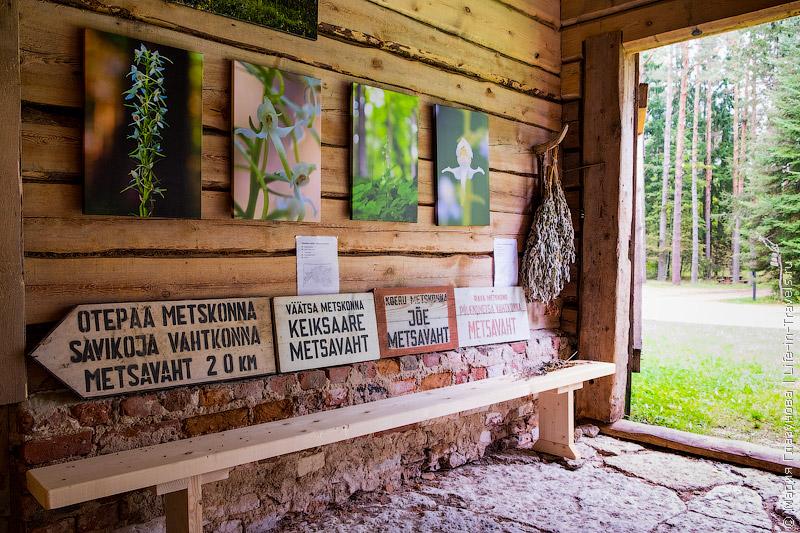 Лесной музей Лахемаа