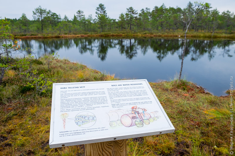 Национальный парк Лахемаа, болото Виру, Эстония