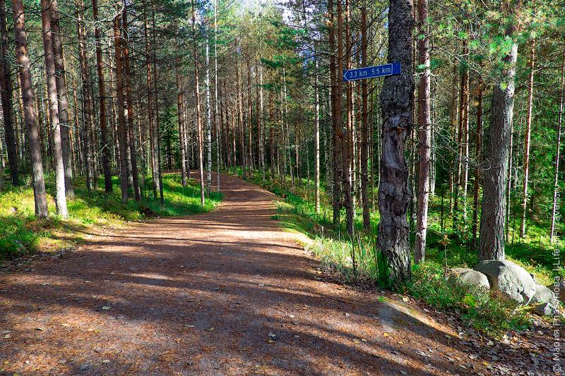 Командная игра – мобильное приключение «Action Track» в национальном парке «Нууксио»