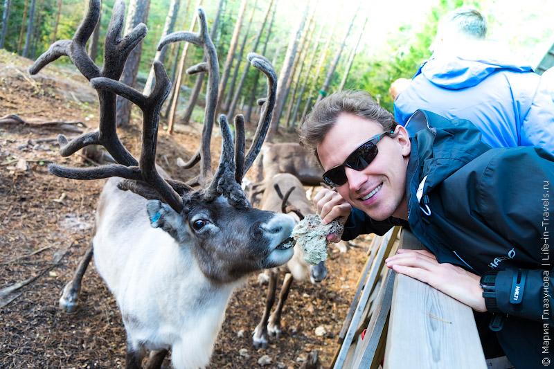Финляндия, северный олень.jpg