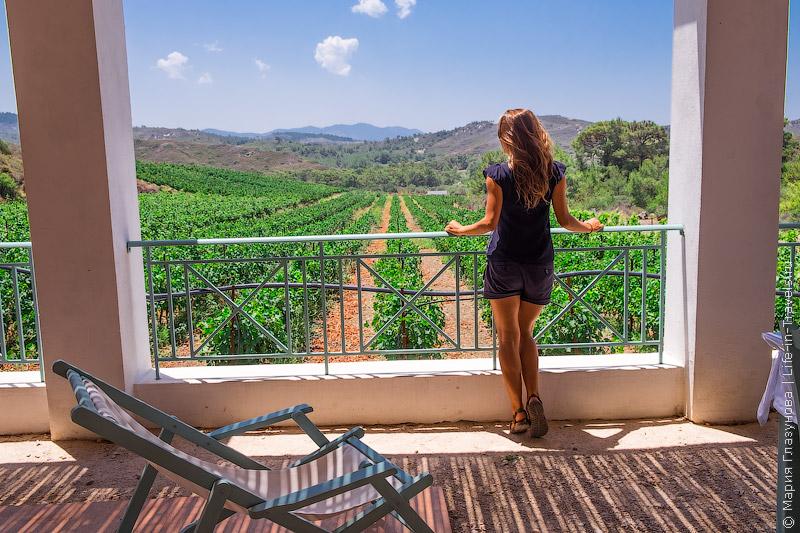 Виноградники на Родосе