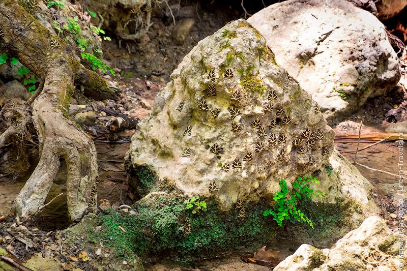 Долина Петалудес или долина бабочек на Родосе
