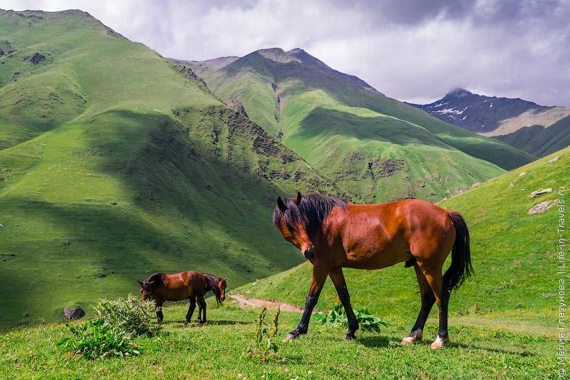 Военно-Грузинская дорога – все достопримечательности или живописный маршрут по Грузии