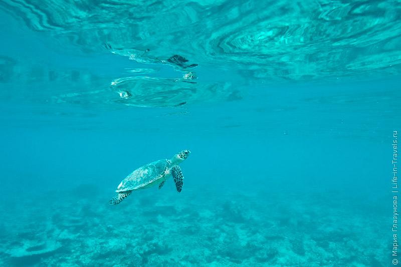 Сноркелинг на Мальдивах