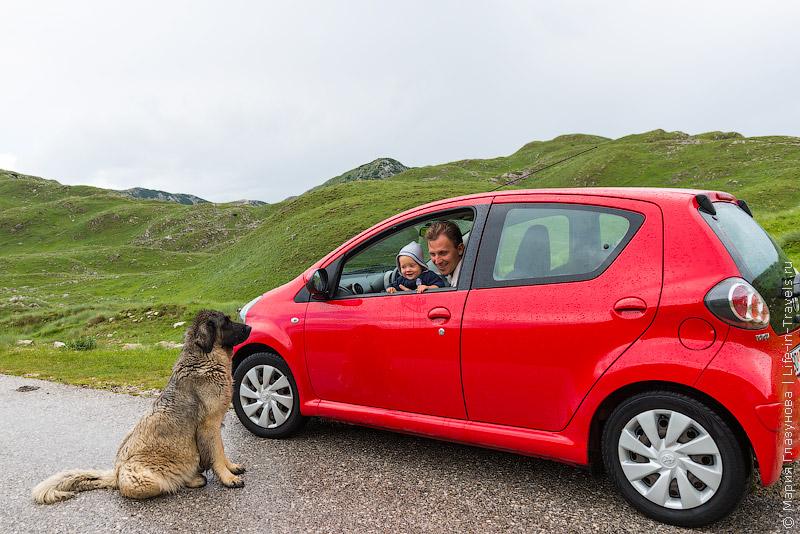 Можно ли ставить кенгурятник на авто