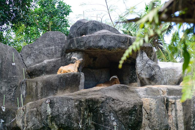 Bali Safari Park